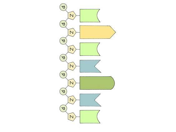 RNA – Bau und Funktion (Übungen & Arbeitsblätter)