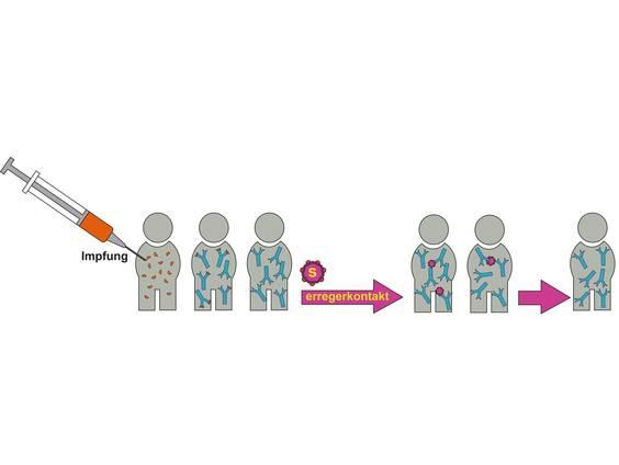 Impfung – aktive und passive Immunisierung (Übungen & Arbeitsblätter)