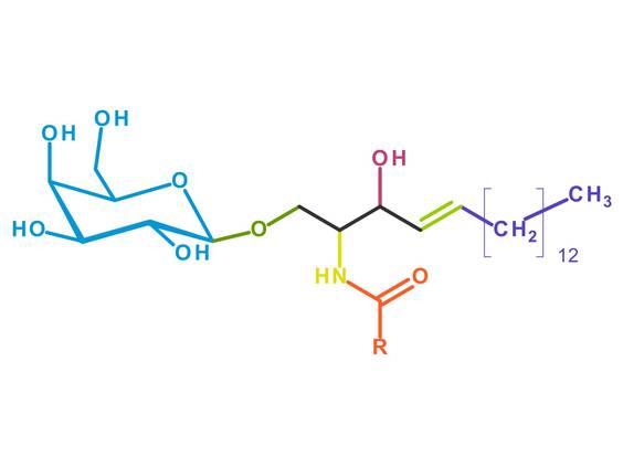 Glykolipide und Glykoproteine (Übungen & Arbeitsblätter)