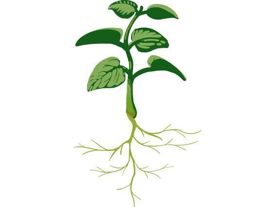 Was brauchen Pflanzen zum Wachsen? (Übungen & Arbeitsblätter)