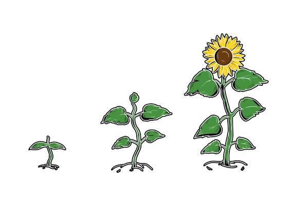 Quellen, Keimung, Wachstum (Übungen & Arbeitsblätter)