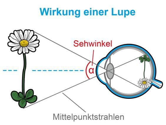 Lupe und Mikroskop (Übungen & Arbeitsblätter)