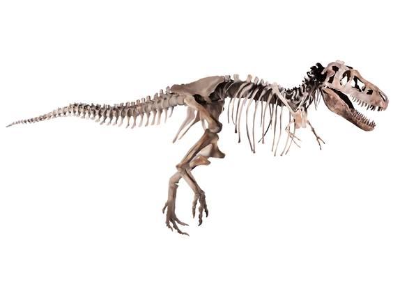 Kreidezeit – Zeitalter der Dinosaurier (Übungen & Arbeitsblätter)