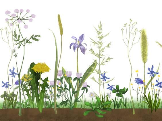 Tiere und Pflanzen auf der Wiese (Übungen & Arbeitsblätter)