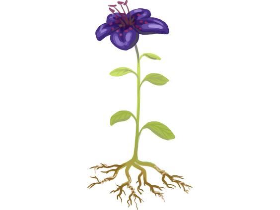Die Pflanzenorgane (Übungen & Arbeitsblätter)