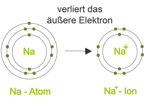 Bioelektrizität in Zellen – Entstehung und Bedeutung (Übungen ...