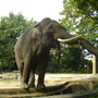 Berliner zoo 2014 %2818%29
