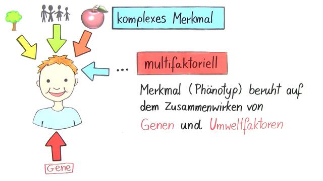 Vererbung komplexer Merkmale – Größe, Gewicht und Intelligenz ...
