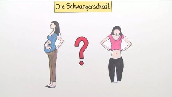 Schwangerschaft – Wie entwickelt sich ein Baby im Bauch?