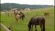 Willi und die Ponys - Was sind Ponys?
