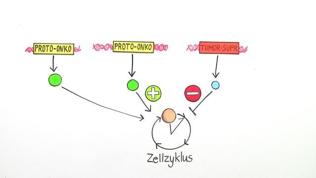 Krebs – Entstehung eines Tumors – Biologie online lernen