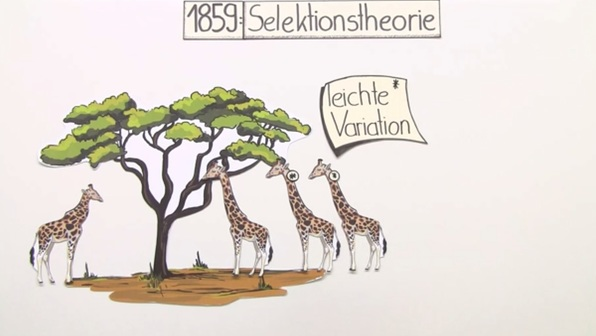 Evolutionstheorien – Überblick