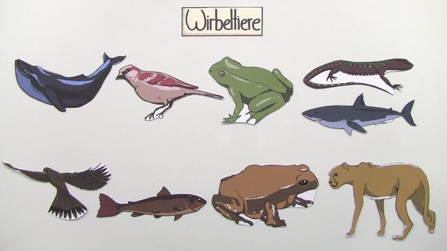 Systematik der Wirbeltiere – Was haben Frosch und Wal gemeinsam?