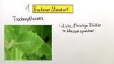 Pflanzen verschiedener Standorte
