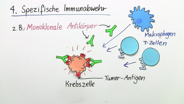 Krebs und Immunsystem
