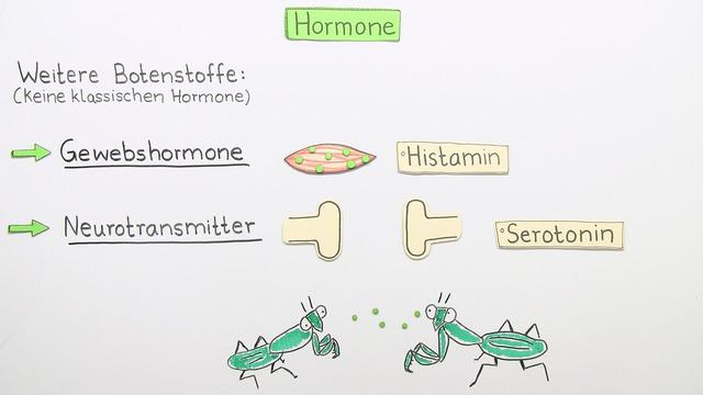 Hormone – Bedeutung und Funktion