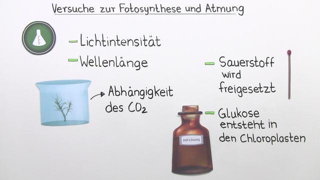 Fotosynthese – experimentelle Nachweise der Reaktion – Biologie ...