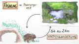 Krötenwanderung – Bedeutung und Schutzmaßnahmen