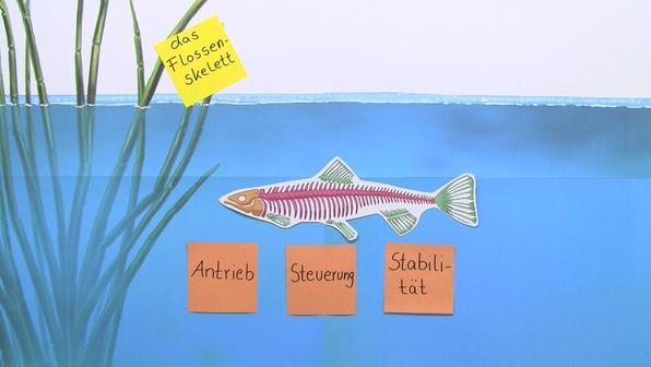 Skelett der Fische