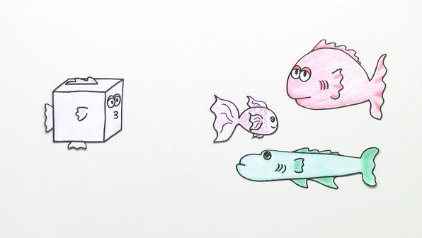 Fische – Körperform und Schwimmblase