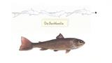 Fortbewegung von Fischen