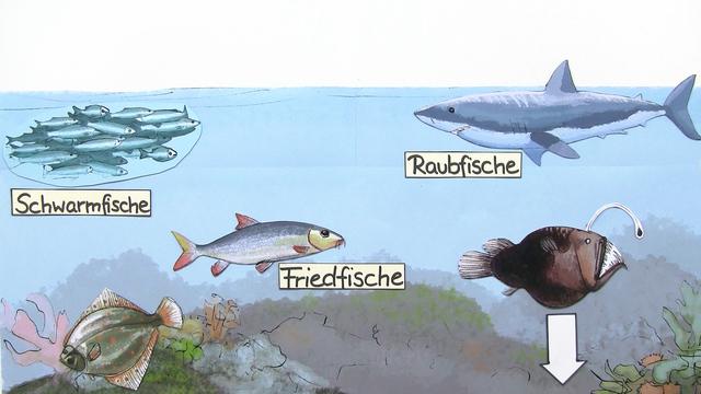 Fische Biologie