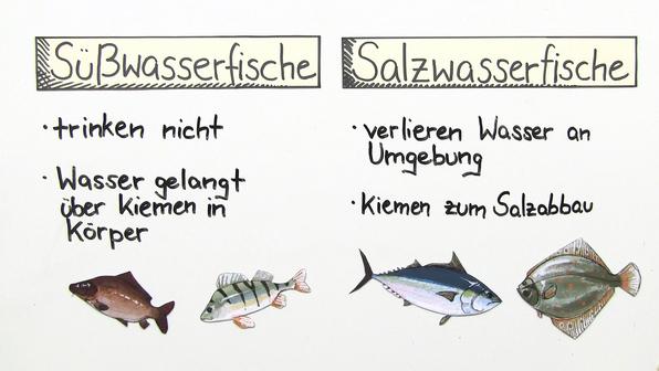 11576 s%c3%bc%c3%9fwasserfische und salzwasserfische