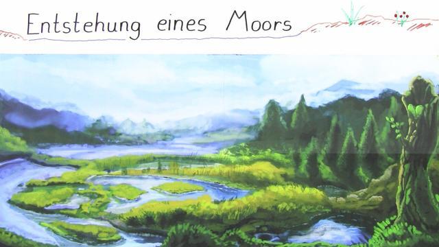 Entstehung eines Moors