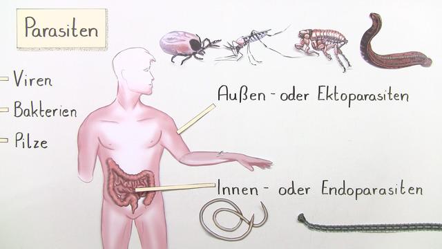Parasiten (Basiswissen)