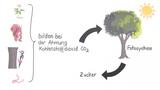 Kohlenstoffkreislauf im Ökosystem Wald