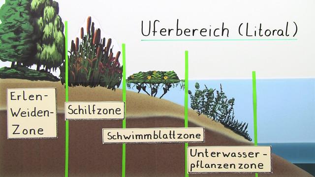 Ökosystem See