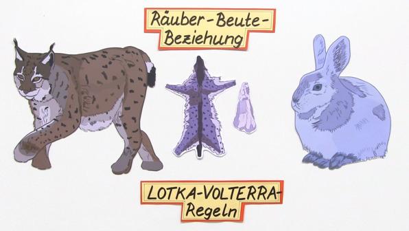 Räuber-Beute-Beziehung - Die Lotka-Volterra-Regeln