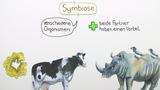 Symbiose - Grundprinzip