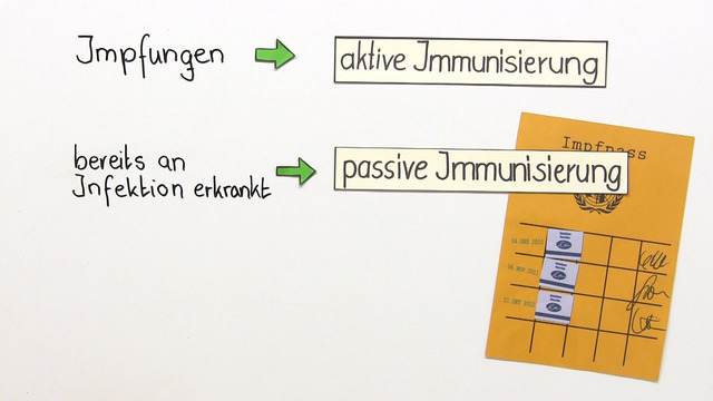 Impfung – aktive und passive Immunisierung