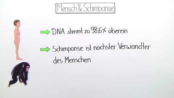 Evolution von Mensch und Schimpanse – der Mensch stammt nicht vom Schimpansen ab