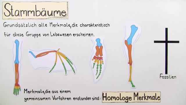 Stammbäume erstellen – Homologie, Analogie und molekulare Methoden ...