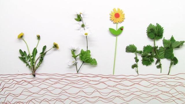 zeigerpflanzen bedeutung f r die umwelt biologie online lernen. Black Bedroom Furniture Sets. Home Design Ideas