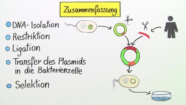 Klonierung – Angewandte Gentechnik