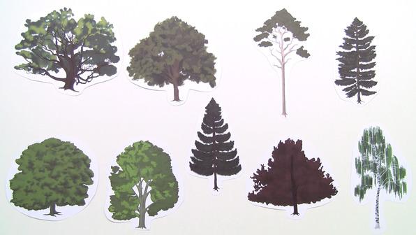 Das Bestimmen von Bäumen
