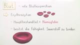 Blut – Zusammensetzung und Funktion