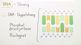 Wie ist die DNA aufgebaut?