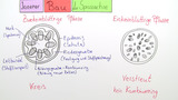 Sprossachse – Bau und Funktion (Vertiefungswissen)