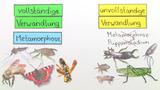 Entwicklung von Insekten – vom Ei zur Imago
