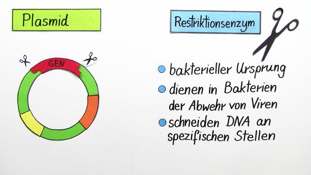Genetische Forschung – Einsatz von Bakterien