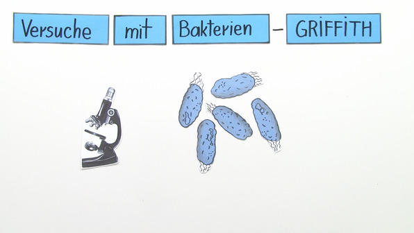 Griffith – Transformation bei Bakterien