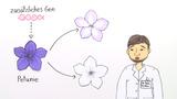 RNA-Interferenz – Abschalten eines Gens