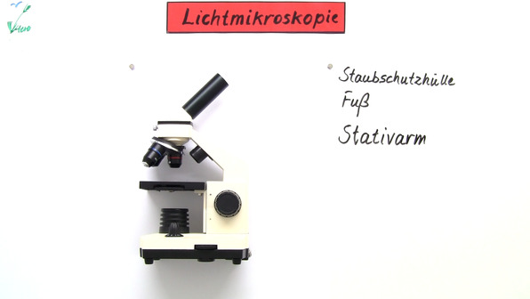 Das Lichtmikroskop
