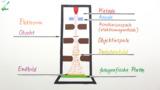 Das Elektronenmikroskop