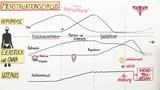 Menstruation – der weibliche Zyklus (Basiswissen)