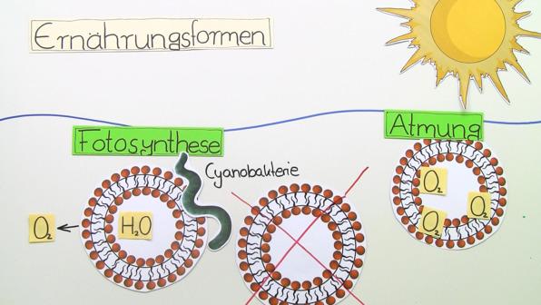 Frühe biologische Evolution